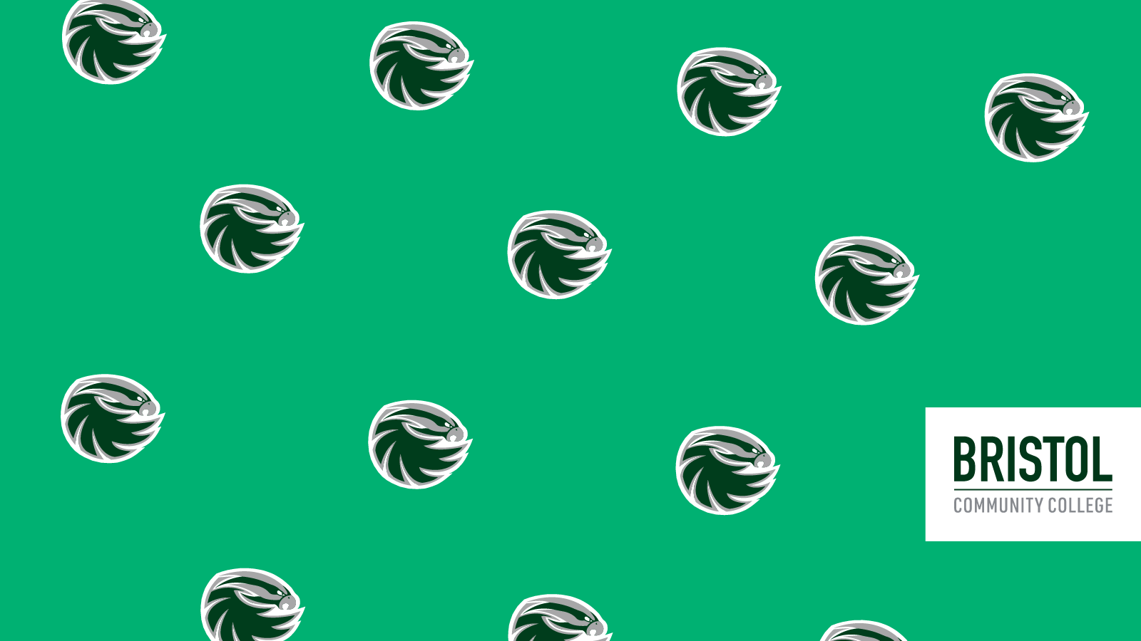 Bristol Zoom background-Bayhawk Pattern